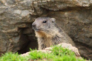 Marmotte emploi recrutement